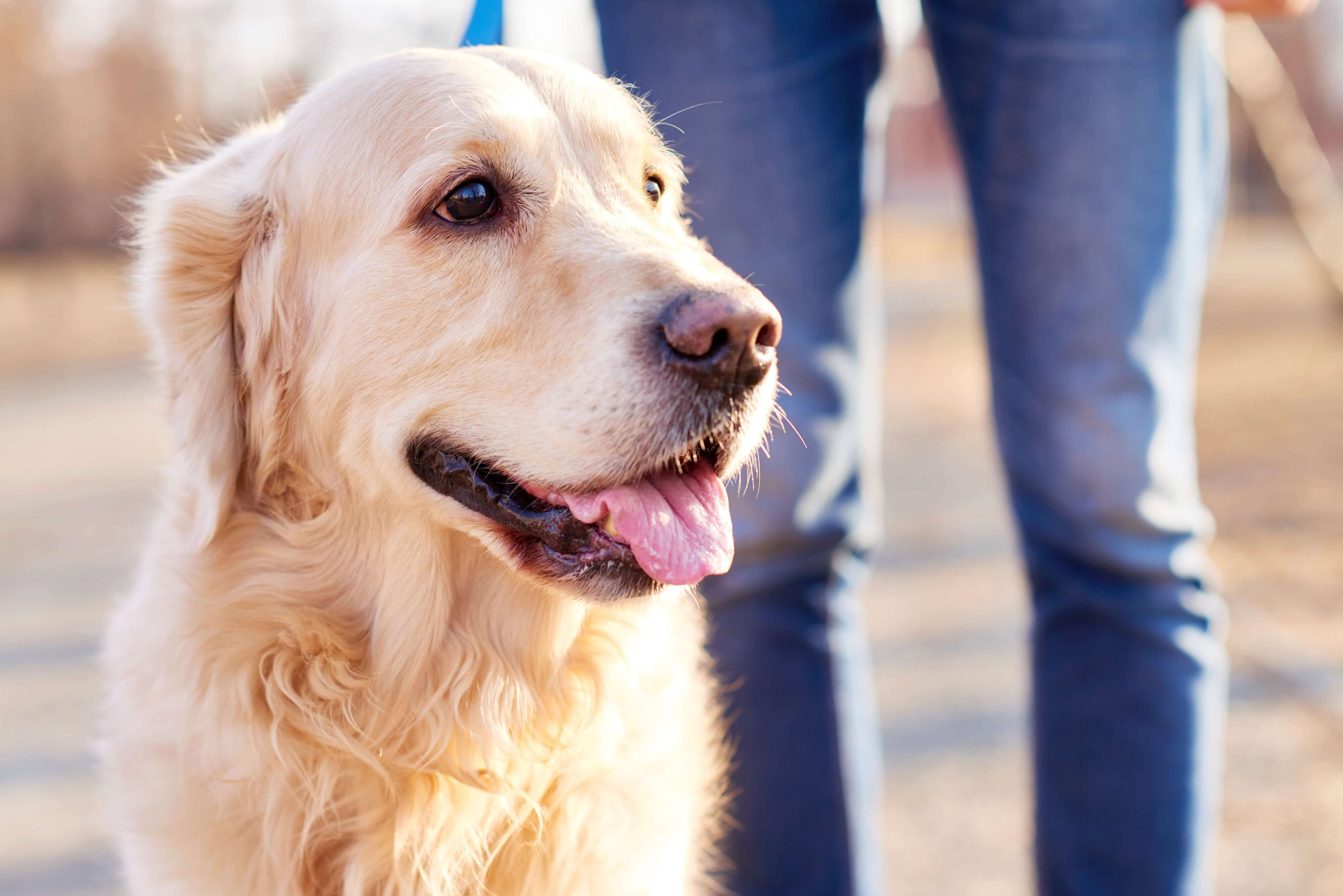 Take a Veterinarian's Advice to Prevent Hair Loss in Your Pet!