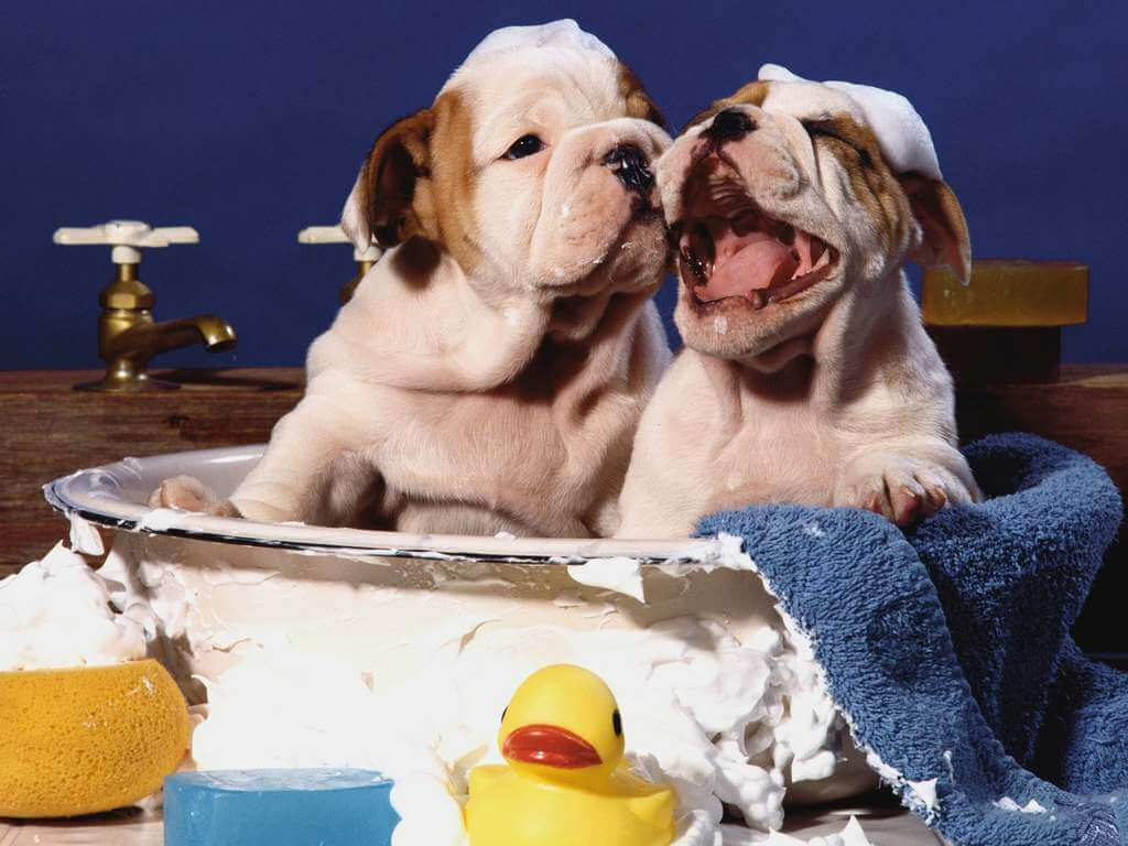 Grooming: How-to's for Bathing Your Pet Properly