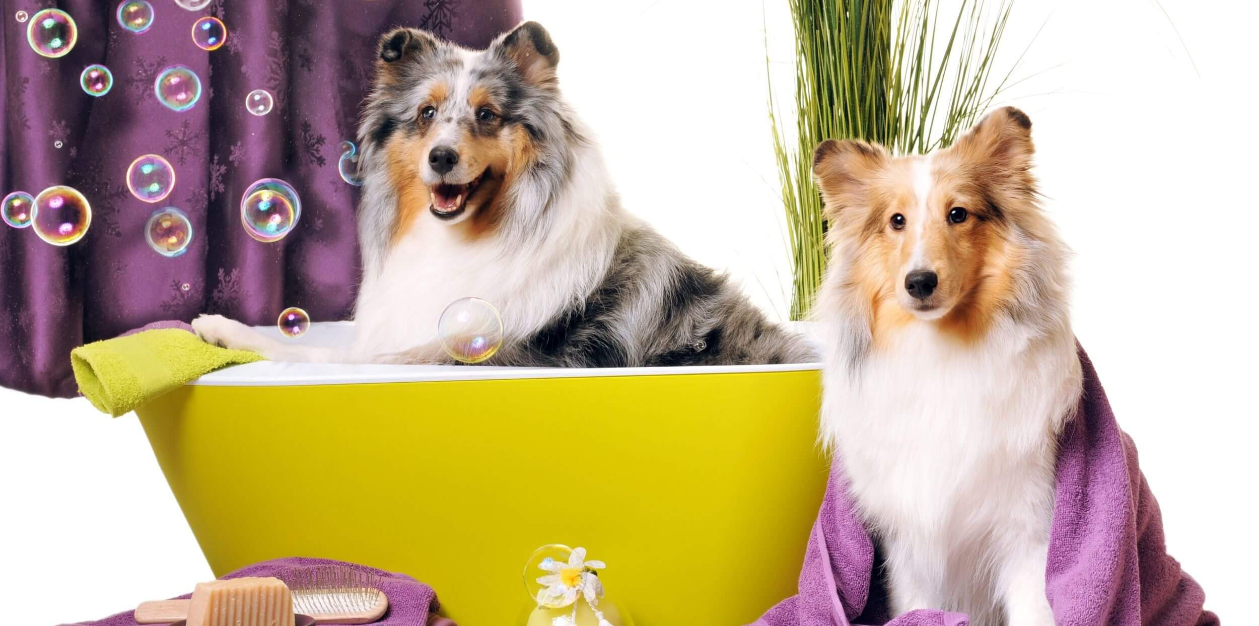So Fresh and So Clean: Choose the Best for Dog Grooming!