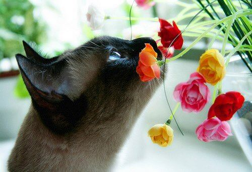 Toxic Plants for Pets: Beautiful (But Deadly) Blooms This Spring