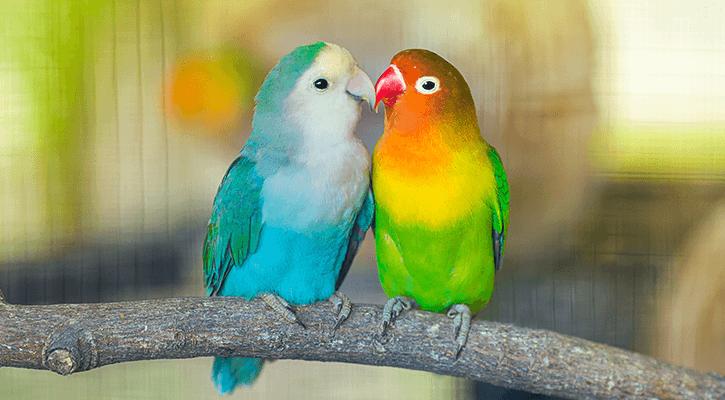 Exotic Pets, Pocket Pets, & Birds